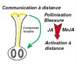 Matton interactions pollen-pistil